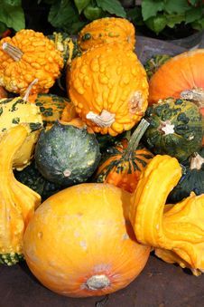 Free Halloween Pumpkins Royalty Free Stock Photography - 6804907