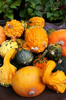 Free Pumpkins Orange Vegetables Stock Photo - 6804990