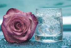 Free Glass With Water And Rose Royalty Free Stock Photography - 6805017