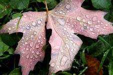 Free Morning Dew On A Leaf Stock Images - 6805304