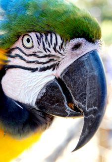Macaw Side View Stock Photos
