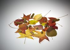 Free Fall Leaves Stock Images - 6806174