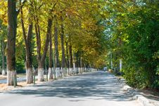 Free Tree Avenue Stock Image - 6806651