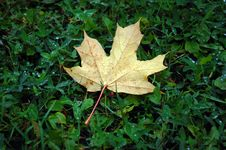 Free Leave Of Autumn Royalty Free Stock Image - 6806986