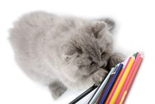 Free Blue Kitten Playing With Pencils Isolated Stock Images - 6807314