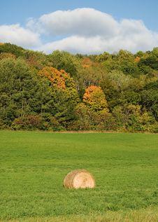Free Autumn Royalty Free Stock Photography - 6807537