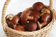 Free Mushrooms In A Basket Stock Images - 6807884