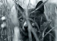 Free Cat Royalty Free Stock Image - 6808076