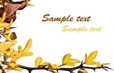 Free Sprig With Yellow Leaves Royalty Free Stock Image - 6808256
