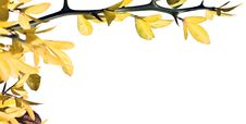 Free Sprig With Yellow Leaves Stock Photos - 6808263