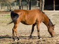 Free Adult Horse Stock Photo - 6811940