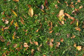 Free Autumn Leaves On Green Grass Royalty Free Stock Image - 6813076
