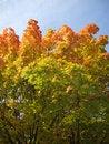 Free Beautiful Autumn Stock Photo - 6813120