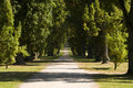 Free Park Alley Royalty Free Stock Photography - 6815417