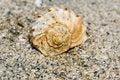 Free Seashell On The Beach Stock Photo - 6815630