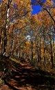 Free Fall Splender Royalty Free Stock Photography - 6817237