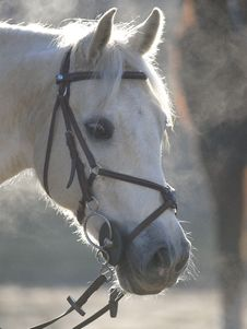 Free Horse Head On A Misty Day Stock Photography - 6810012