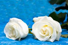 Free White Roses Over Blue Royalty Free Stock Photography - 6810407