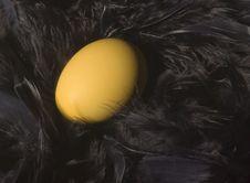 Free Golden Nest Egg Stock Photos - 6810713