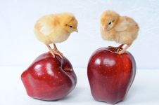 Free Two Tiny Chicken Royalty Free Stock Photo - 6810905