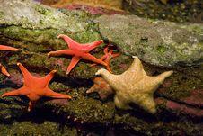 Starfish On Rocks Royalty Free Stock Photography