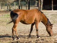 Free Adult Horse Stock Photo - 6811940