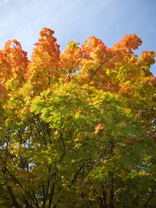 Free Beautiful Autumn Stock Photo - 6813120