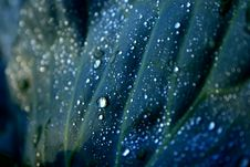 Dew Drops On Cabbage Leaf Stock Photography