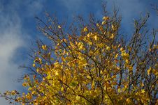 Free Autumn Leaves Stock Photography - 6814492