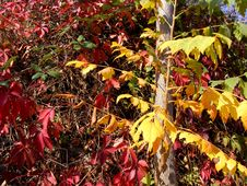 Free Autumn Variegation Royalty Free Stock Photography - 6814927