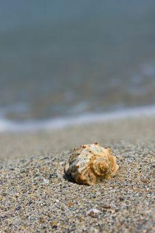 Free Seashell On The Beach Stock Photos - 6815633