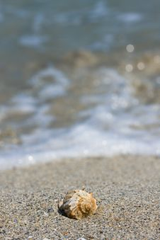 Free Seashell On The Beach Stock Images - 6815634