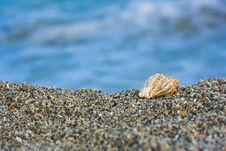 Free Seashell On The Beach Royalty Free Stock Photo - 6815695