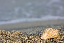 Free Seashell On The Beach Royalty Free Stock Photos - 6815698