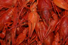 Free Red Lobster Stock Image - 6816081