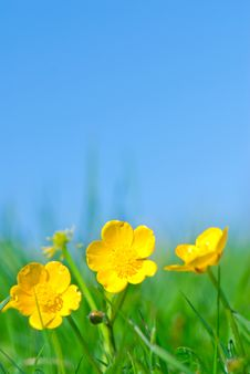 Free Yellow Flowers Royalty Free Stock Photos - 6816958