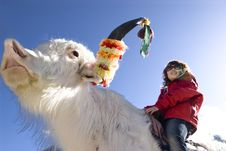 Free The Girl Riding A Yak Royalty Free Stock Image - 6818586