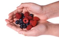 Blueberries Raspberries In Cupped Hands Royalty Free Stock Photo