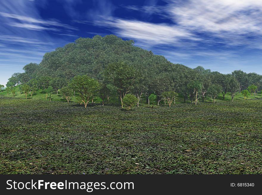 Lush Hilltop