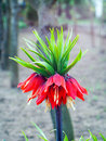 Free Crown Imperial Royalty Free Stock Images - 68179249