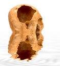 Free Skull Stock Photos - 6827693