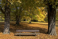 Free Park Bench In The Autumn Royalty Free Stock Images - 6827919
