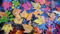 Free Colorful Leaves Stock Photo - 6828870