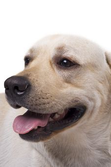 Free Portrait Of The Caucasian Sheep Dog Stock Photo - 6820110