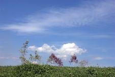 Free Clouds In Blue Skies Stock Image - 6820431