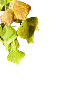 Free The Leaf Stock Photography - 6822192