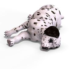 Free Cute Puppy Dalmation Royalty Free Stock Photos - 6822388