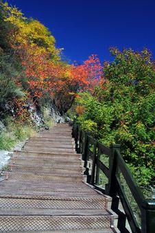 Stairway To Autumn Stock Photo
