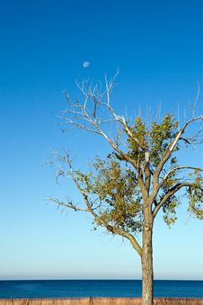 Free Tree And Daytime Moon Stock Photography - 6823352