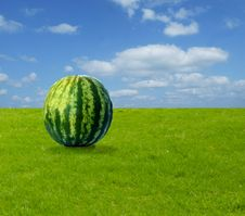Free Watermelon On Grass Stock Photos - 6824203